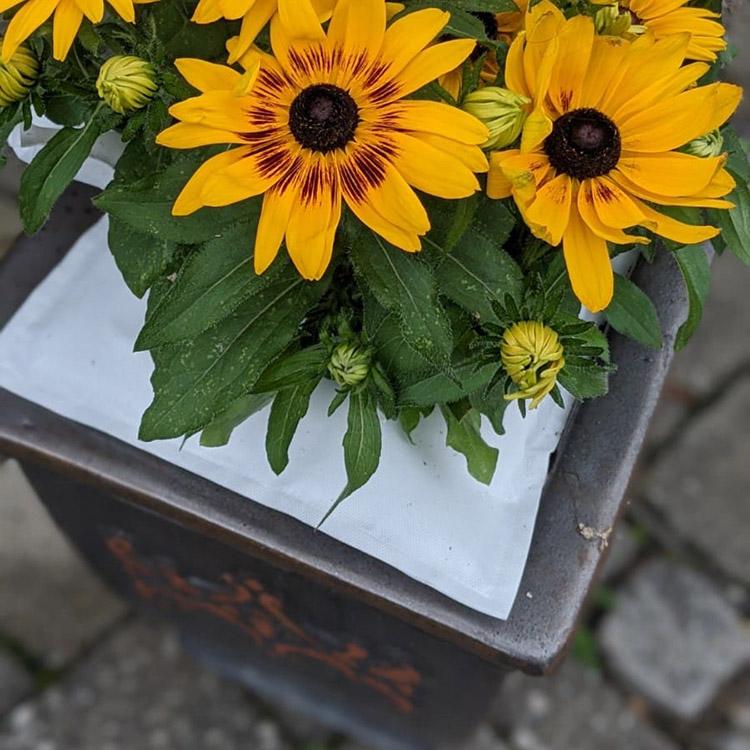 Bewässerungssystem WATY für Blumen, Hecken und Bäume - Eckig 10 cm Durchmesser