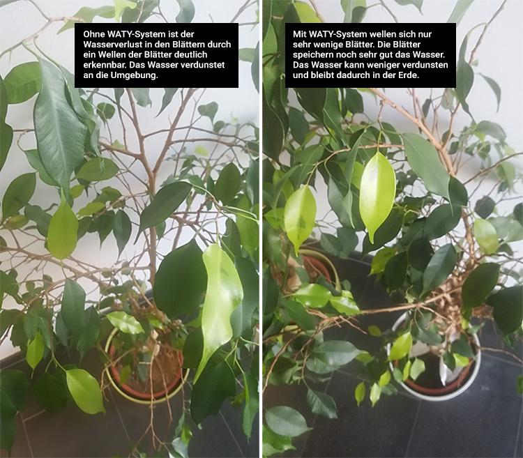 Bewässerungssystem WATY für Blumen, Hecken und Bäume - Rund 30 cm Durchmesser