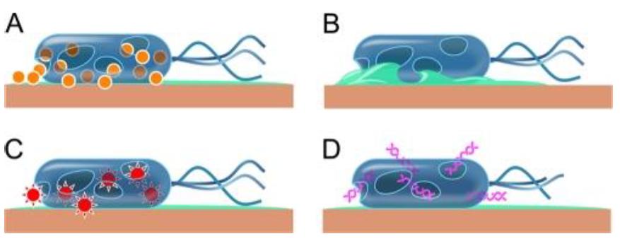 Illustration zur Reaktion von SARS-CoV-2-Virus auf Kupferoberflächen